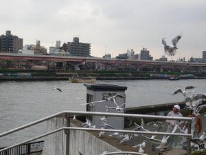 blog20090401桜 014.jpg